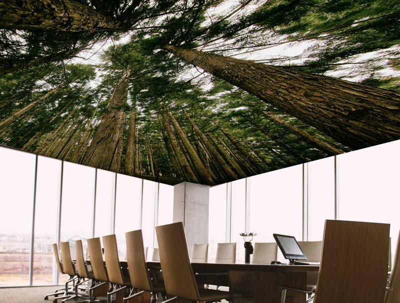 טפט לחדר ישיבות | טפט לתקרה | בין העצים